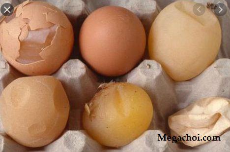 Gà đẻ trứng non, vỏ mỏng, sần sùi