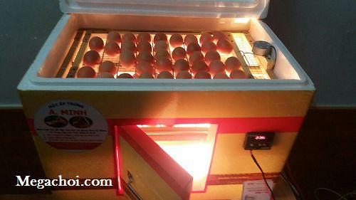 Máy ấp trứng gà