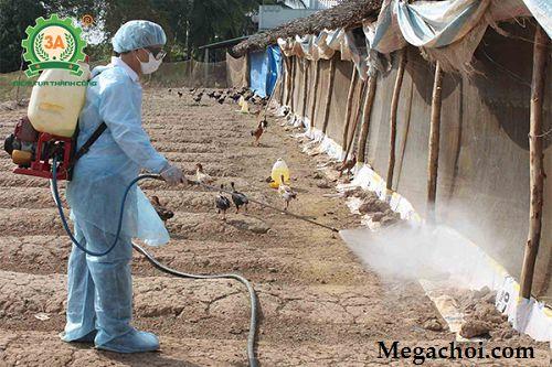 Phòng Bệnh E.coli