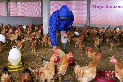Chăm sóc gà khi gặp mưa lũ